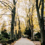Bestattungen-Grote-Luebbecke-Weg-auf-dem-Friedhof